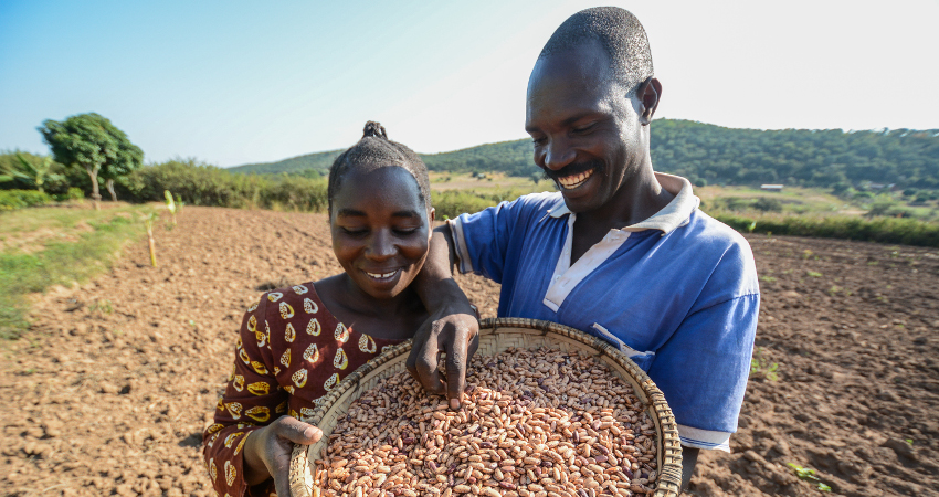 Famille de producteurs de haricots