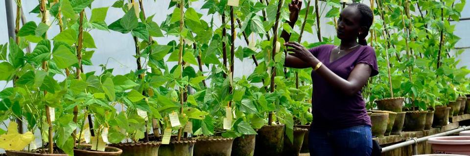 Secteur semencier et transformation agricole