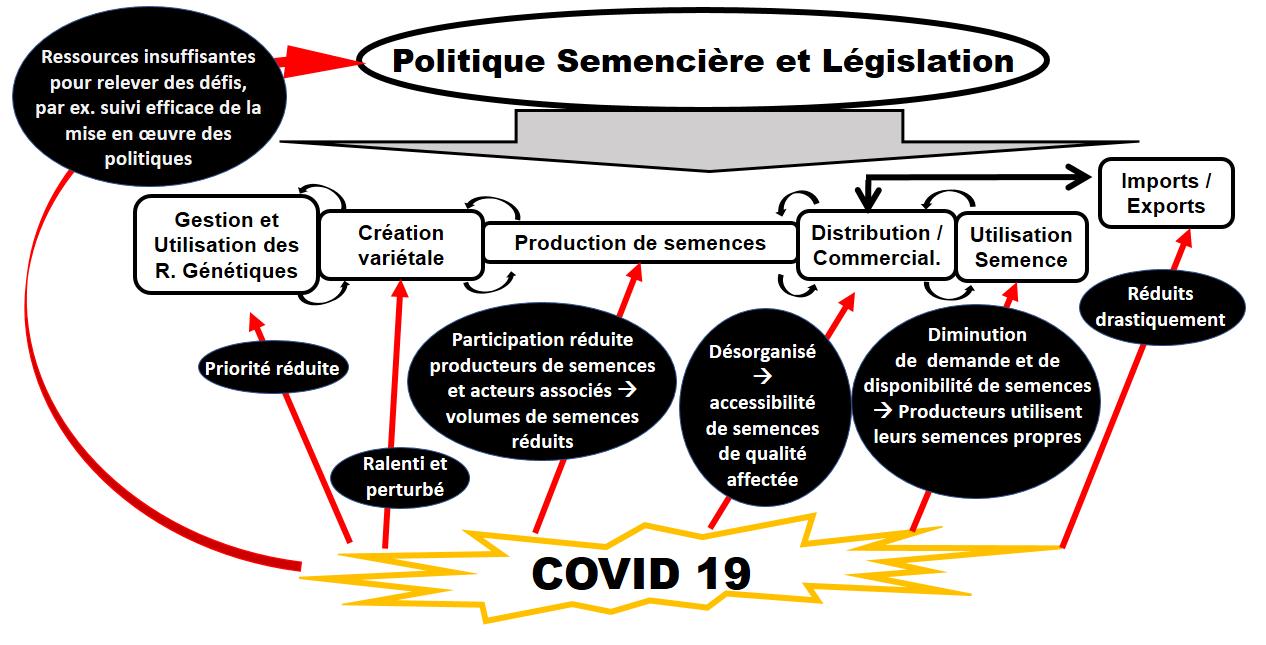 Impact du COVID-19