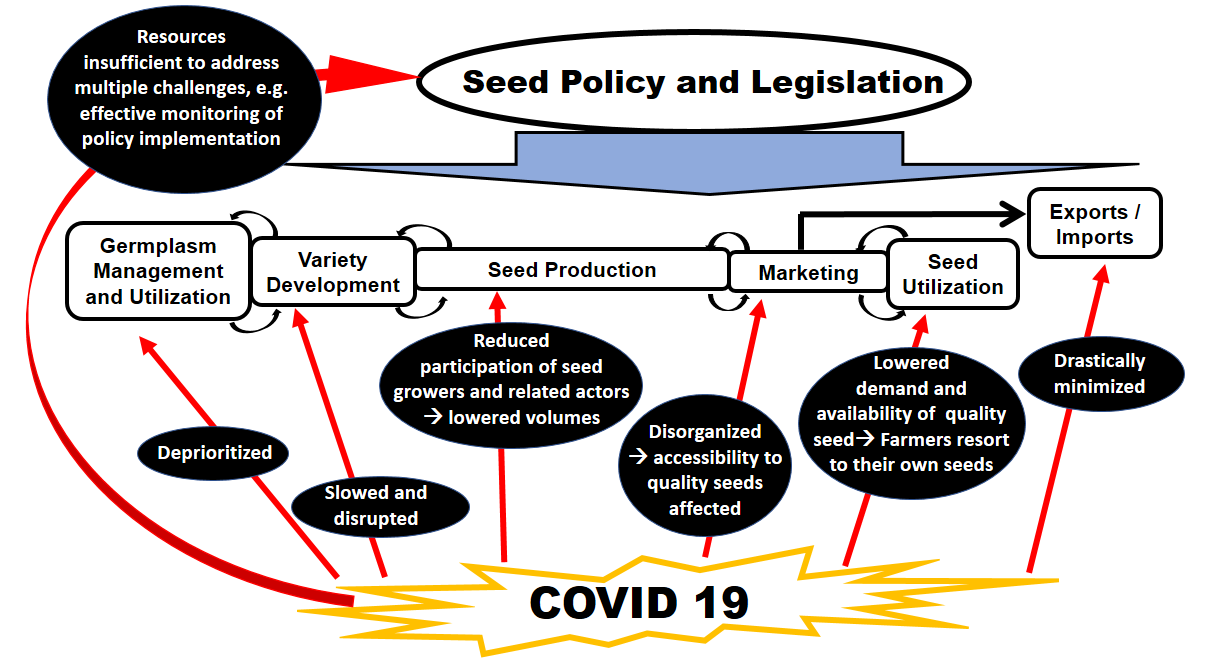 COVID-19 and the seed sector